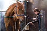 Profiel: Wellantcollege start tweetalige opleiding Paardensport en -houderij